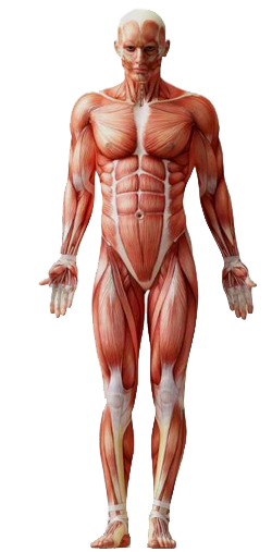 humanBody.png