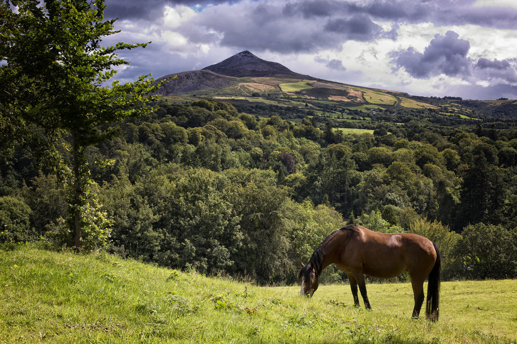 View of sugar loaf mountain
