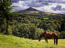 Horse stands in front of sugar loaf in the Wicklow mountains