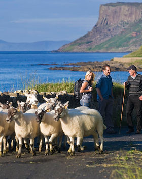 Tourists meet a farmer with sheep. Typical Irish scenery in background.