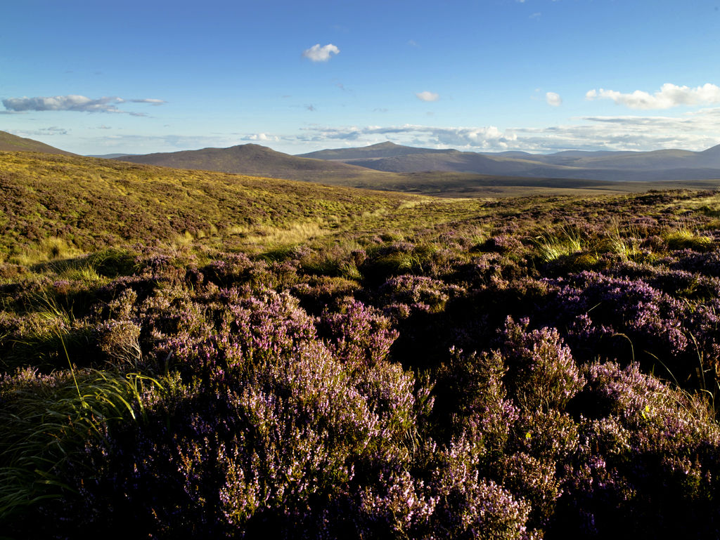 Sally Gap in Wicklow Mountains