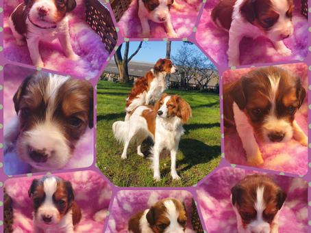 Lila's Belletjes N-Nest 24-03-2021: 3 weken oud