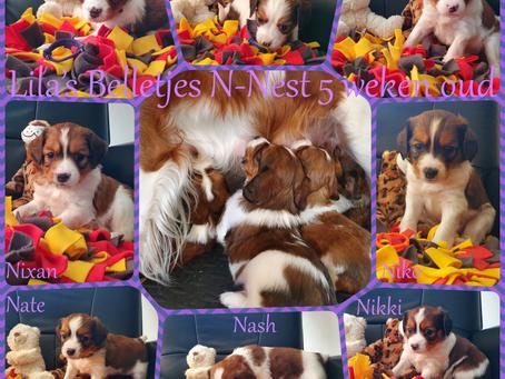 Leala's Belletjes N-Nest 24-03-2021 5 weken oud