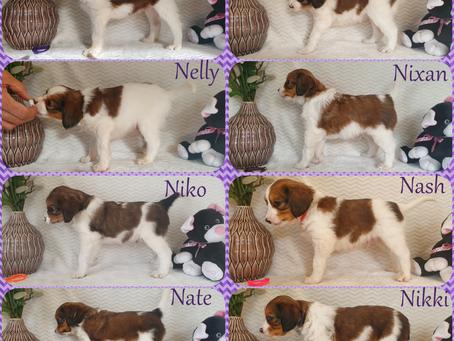 Lila's Belletjes N-Nest 24-03-2021 6 weken oud