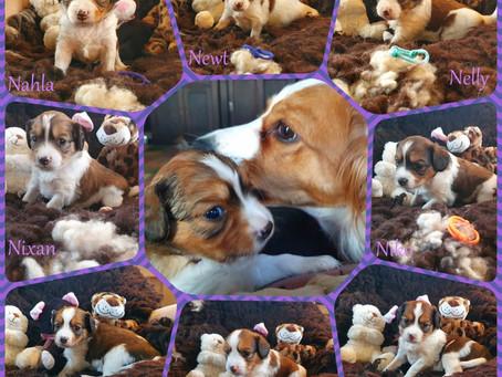 Lila's Belletjes N-Nest 24-03-2021 4 weken oud