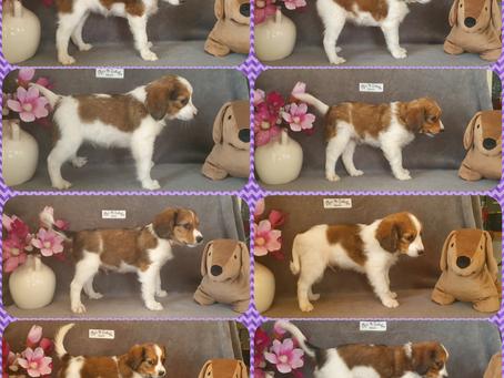 Lila's Belletjes N-Nest 24-03-2021 8 weken oud