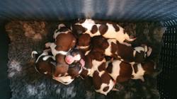 20210325 Mandje vol pups