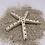 Thumbnail: Hanging Starfish
