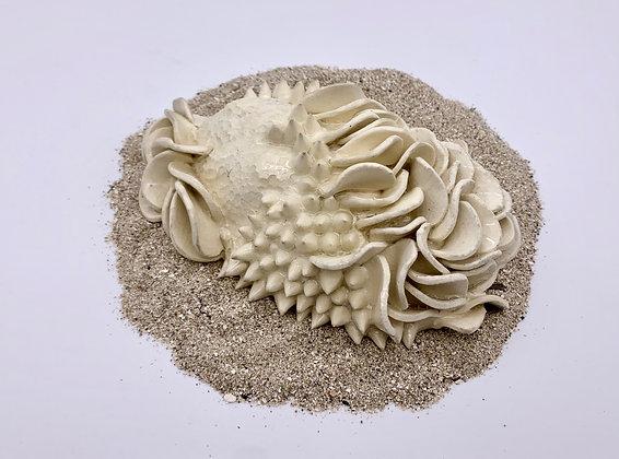 Bleached Coral Sculpture