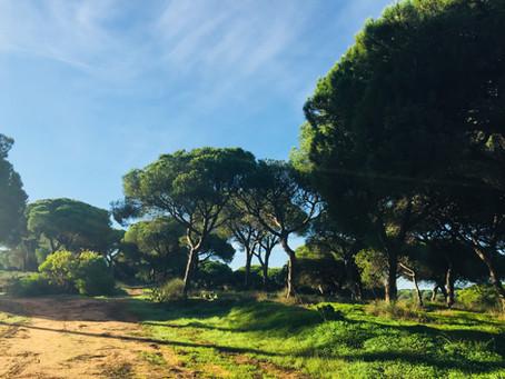 Coming soon in Algarve