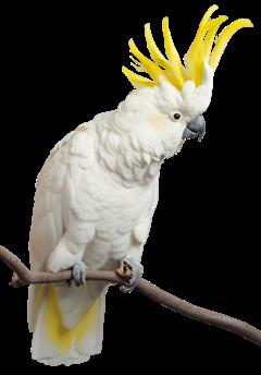 """Dans son restaurant, """"Le Pont de l'Orne"""", madame S. logeait un perroquet bnommé Coco. Il demandait aux clients : """"T'as faim ?"""" et insultait ceux qui n'étaient pas gentils de """"Patate""""."""