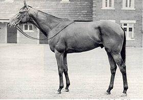 Madame C. était mariée à un jockey. Elle a donc connu plus d'un cheval. Elle montait même à cheval en robe !