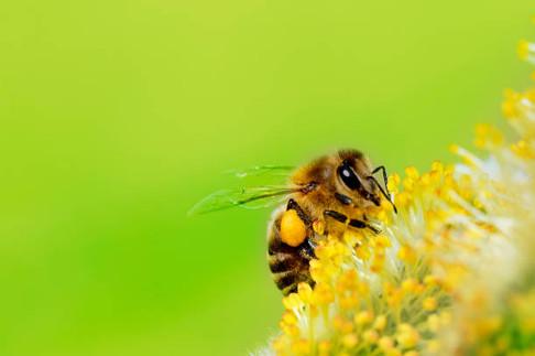 Madame D était apicultrice. Ses abeilles n'aimaient pas quand elle était habillée trop sombre.