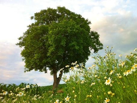 Begegnung mit der Natur