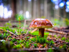 C'est la saison des champignons !