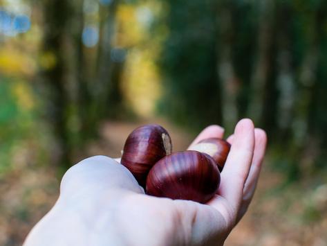 L'automne et son parfum de châtaigne 🌰