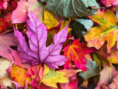 Astuces de saison pour remplir votre panier d'automne