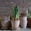 Thumbnail: Natural Italian Herb & Plant Pots