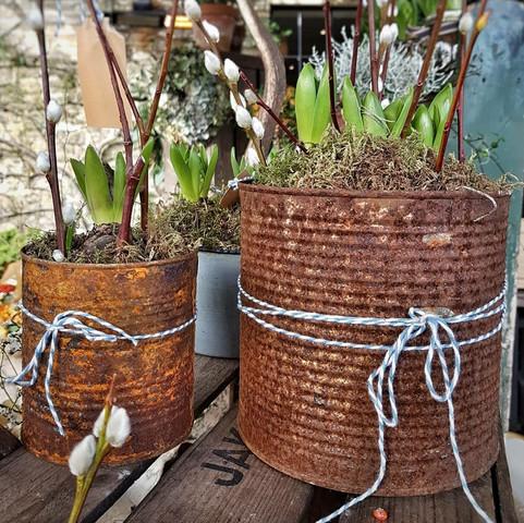 Bulbs & Moss