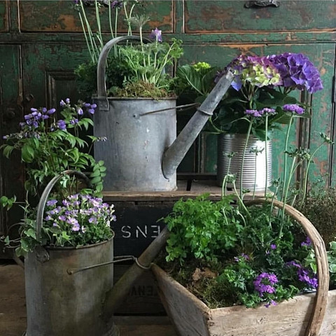 Planted Vintage pots & cans