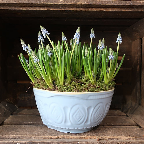 Vintage French Mixing Bowl filled with Muscari