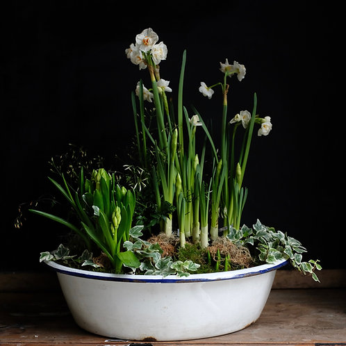 Bulbs and moss planted in Vintageware