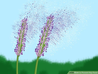 Acupuncture for Hay Fever