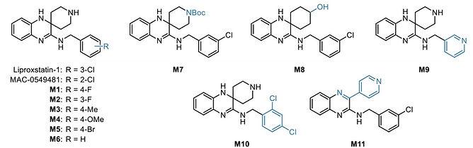 2021-liproxstatin paper website image.jp