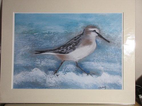 Limited edition Print - Sea bird