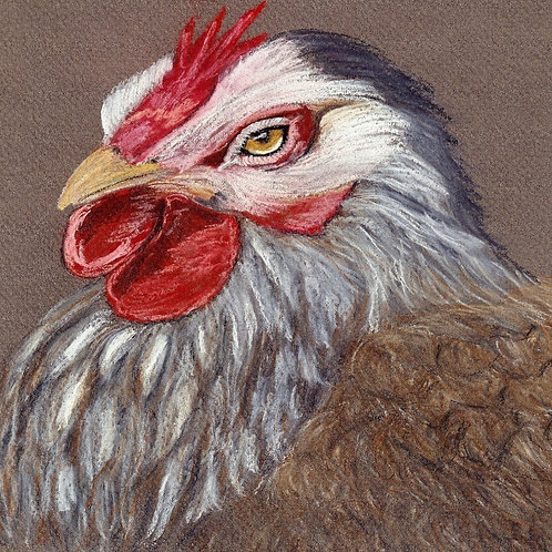 (44) Dixie Chick - Greeting Card