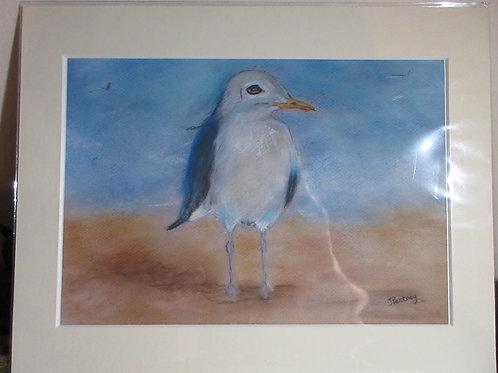 Original pastel drawing - Seagull on sand