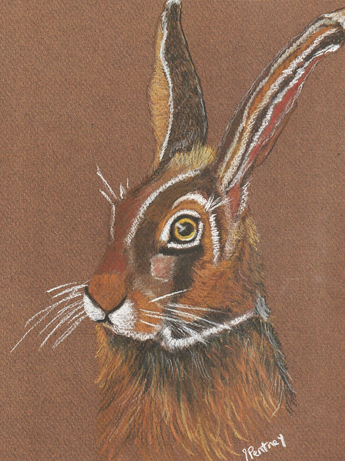 (51) Surprised Hare - Greeting card