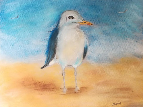 (18) Seagull on the sand - Greeting card