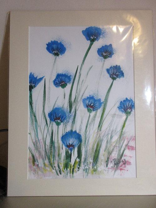 Limited edition Print- cornflowers
