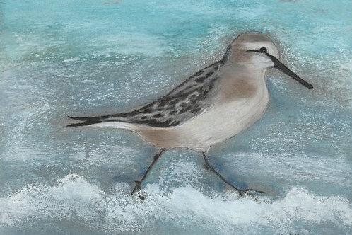 (9)  Seabird - wader greeting card