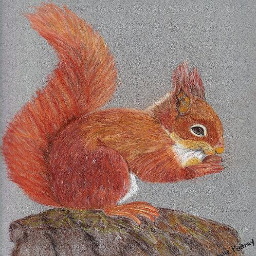 (47) Rusty - squirrel greeting card