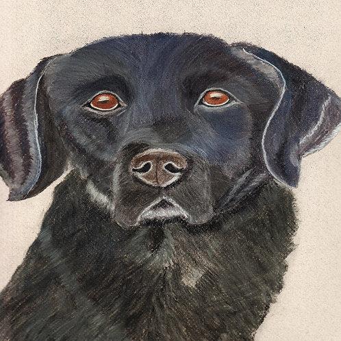 (43) Cassie - Black Labrador Greeting Card
