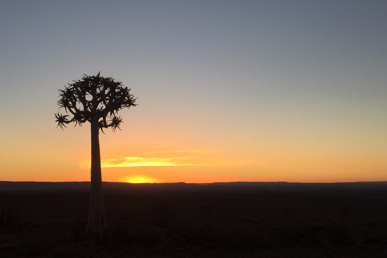 boom met uitzicht_edited