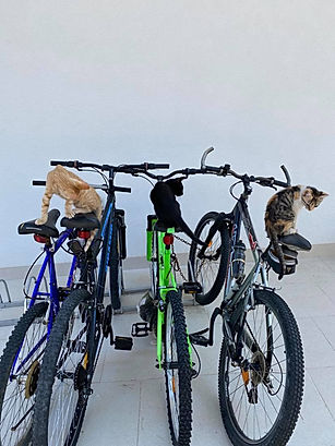 Gajeta bicycle.jpg