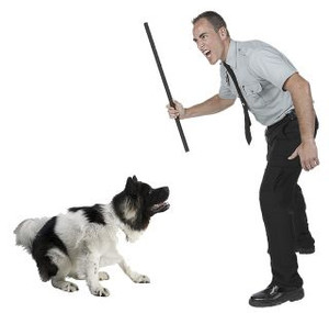 Use of punishment during dog training leads to increased aggression.