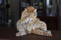 cat-3602557_1920.jpg