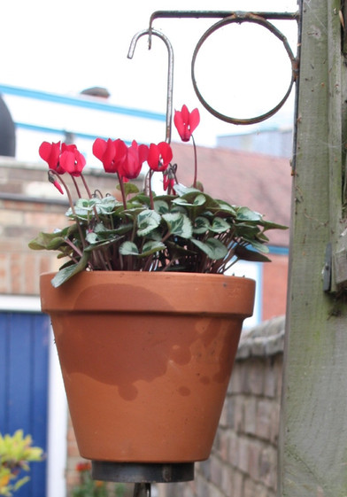 Hanging Planter_edited_edited.jpg