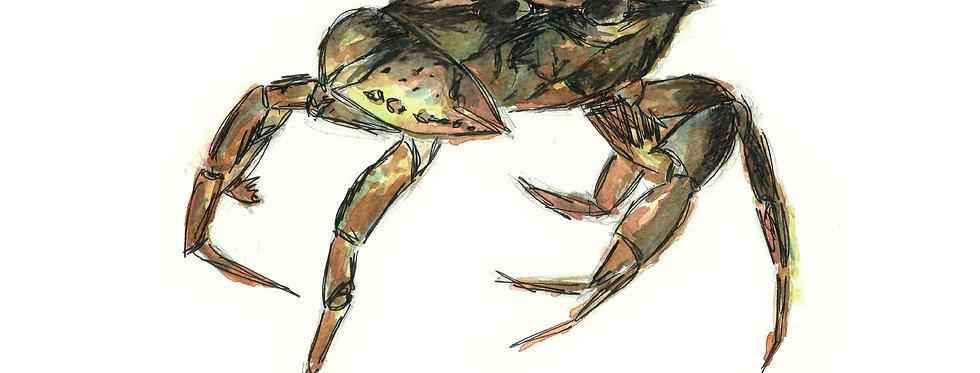 Creeping Crab