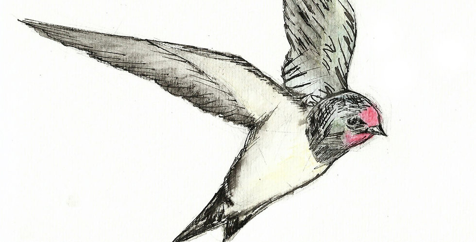 The Swallow - Original