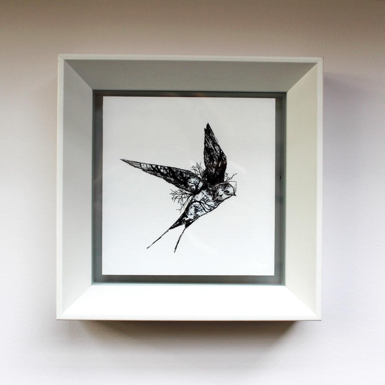 swallow_white frame