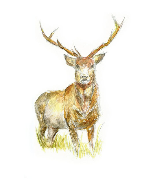 The Stag card