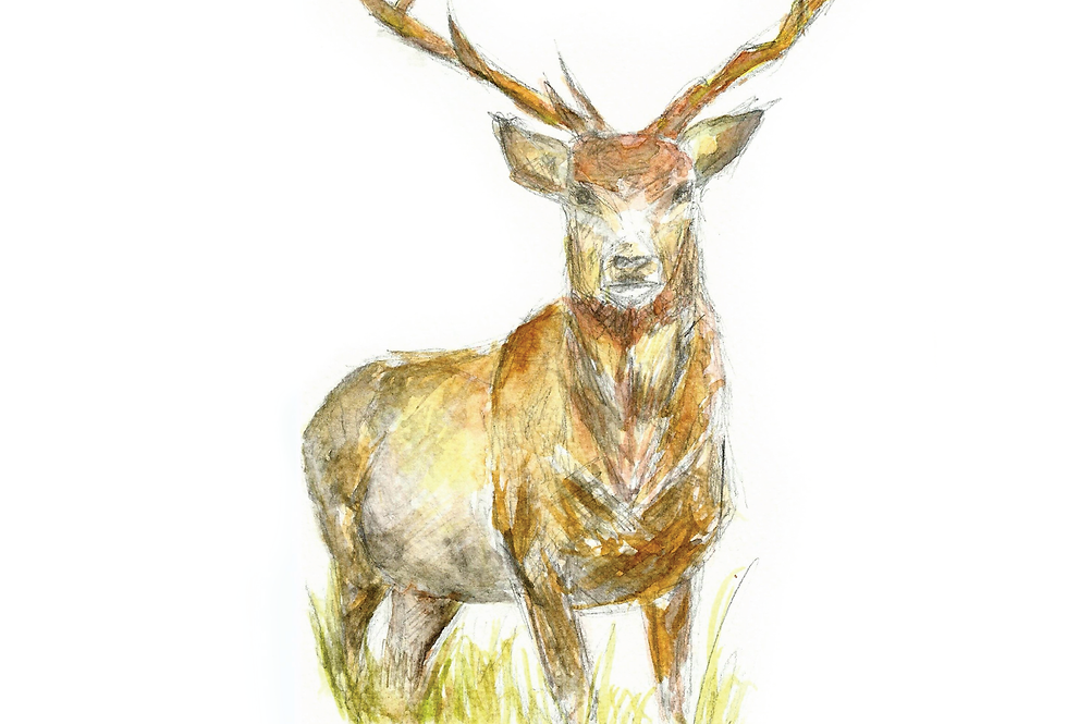 The Stag Print