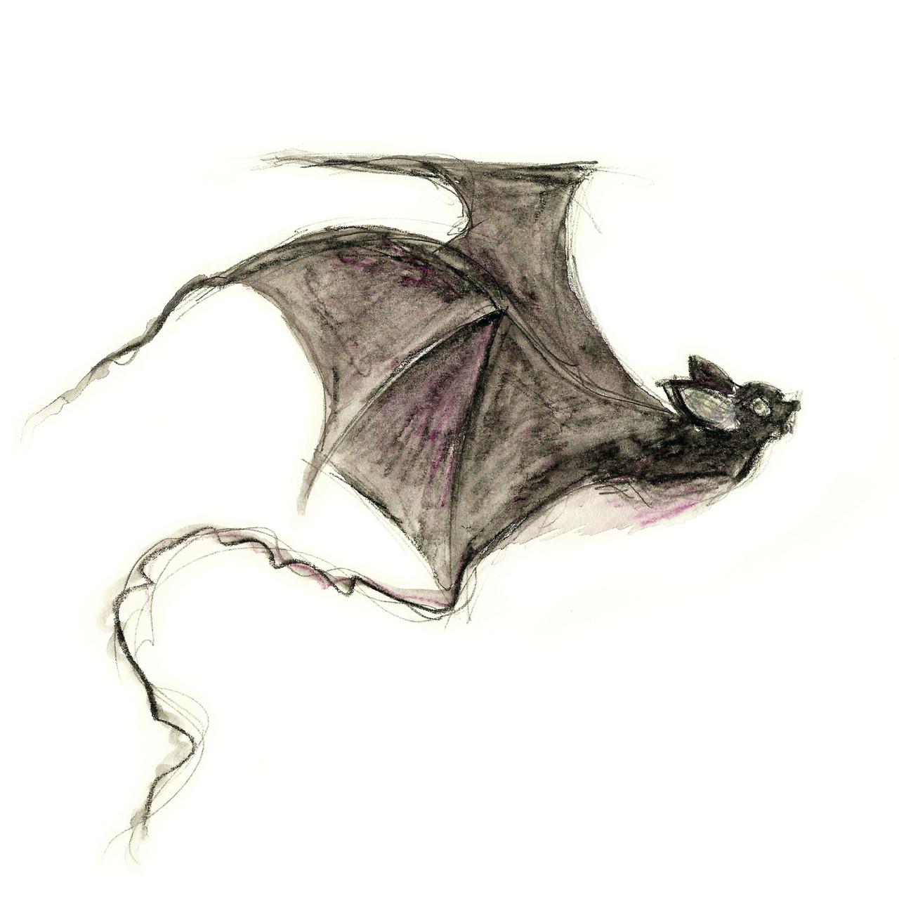 Vampire Bat Print | Morvenna