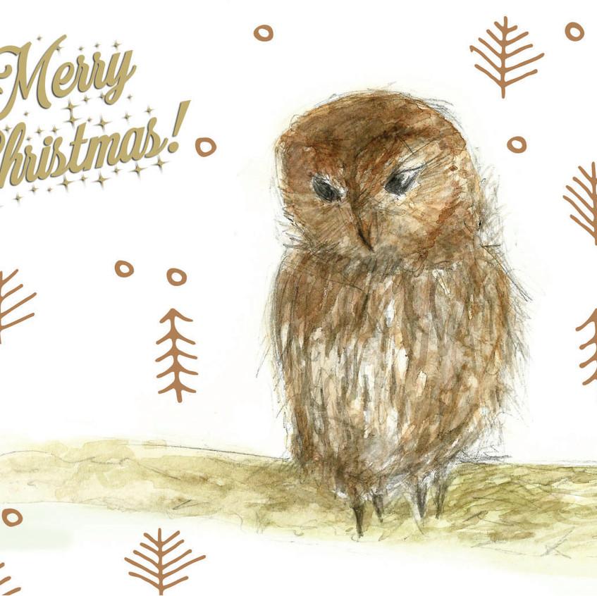 Tawny Owl Christmas Card