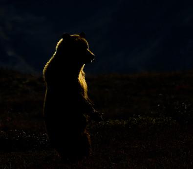 'Alaskan Gold' by Jennifer James